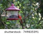 beautiful bright red male... | Shutterstock . vector #749835391