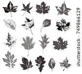set of autumn leaves  maple ... | Shutterstock .eps vector #749866129