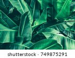 Stock photo tropical banana leaf texture large palm foliage nature dark green background 749875291