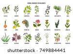 best herbal remedies for... | Shutterstock .eps vector #749884441