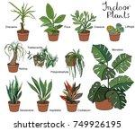 set of different indoor plants... | Shutterstock .eps vector #749926195
