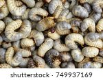 image of grub worms  coconut... | Shutterstock . vector #749937169