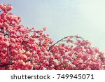 blossoming tree branch with... | Shutterstock . vector #749945071