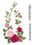 vertical border with branch... | Shutterstock .eps vector #749947081