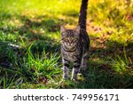 cat in the yard at attention | Shutterstock . vector #749956171
