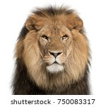 Stock photo close up of lion panthera leo years old in front of white background 750083317