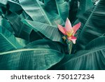 tropical banana leaf texture... | Shutterstock . vector #750127234