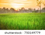 rice field at sunset | Shutterstock . vector #750149779