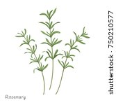 rosemary vector illustration.... | Shutterstock .eps vector #750210577