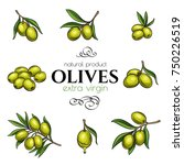set vector hand drawn olives... | Shutterstock .eps vector #750226519