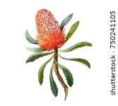 watercolor botanical... | Shutterstock . vector #750241105