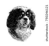 portrait of an old spaniel | Shutterstock . vector #750246121