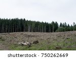 Small photo of Clear-cut: A section of forest that has been clear cut.