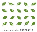 Leafs  Plant  Tree Nature Logo...
