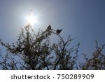 Silhouette Of The Trees In A...