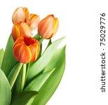 Beautiful Orange Tulips...