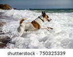 Dog Playing At The Beach In...