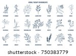 herbal therapy for bronchitis.... | Shutterstock .eps vector #750383779