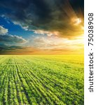 Agricultural Green Field And...