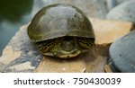 water green turtle in a pond ... | Shutterstock . vector #750430039