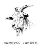 hand sketch head of goat....