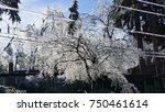 ice tree | Shutterstock . vector #750461614