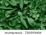creative layout made of green... | Shutterstock . vector #750593404