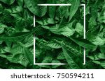 creative layout made of flowers ... | Shutterstock . vector #750594211