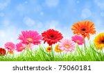 Gerber Flowers Background