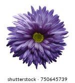 violet  aster flower isolated... | Shutterstock . vector #750645739