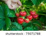 Closeup Of Fresh Organic...