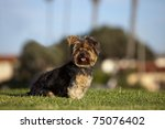 small puppy sitting on the grass | Shutterstock . vector #75076402