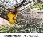 Yellow Butterfly Is About To...