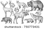 Stock vector animals of europe set wolf badger hedgehog fox moose deer bear rabbit squirrel boar 750773431
