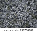 first snow in spruce tree... | Shutterstock . vector #750780109