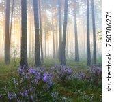 foggy sunrise in the beautiful... | Shutterstock . vector #750786271