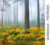 foggy sunrise in the beautiful... | Shutterstock . vector #750786301
