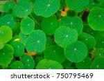 green leaves | Shutterstock . vector #750795469