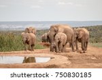 a herd of adult  juvenile and...   Shutterstock . vector #750830185
