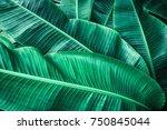 tropical banana leaf texture ... | Shutterstock . vector #750845044