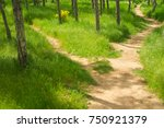 the path among the tall grass... | Shutterstock . vector #750921379