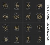 vector set design templates and ... | Shutterstock .eps vector #750971761
