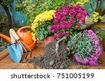 gardening  chrysanthemums in...   Shutterstock . vector #751005199
