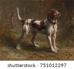 A Limier Briquet Hound  By Ros...