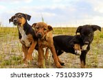 fun out of three puppies | Shutterstock . vector #751033975