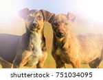 two puppys with merry eyes in... | Shutterstock . vector #751034095