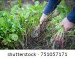 man hands clearing his garden... | Shutterstock . vector #751057171