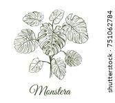 monstera plant skech. monstera... | Shutterstock .eps vector #751062784