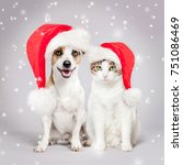 Stock photo dog and cat in christmas hat pets friends 751086469