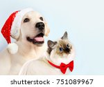 Stock photo cat and dog together neva masquerade kitten golden retriever looks at right puppy with christmas 751089967